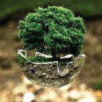 Ekologiski produktai